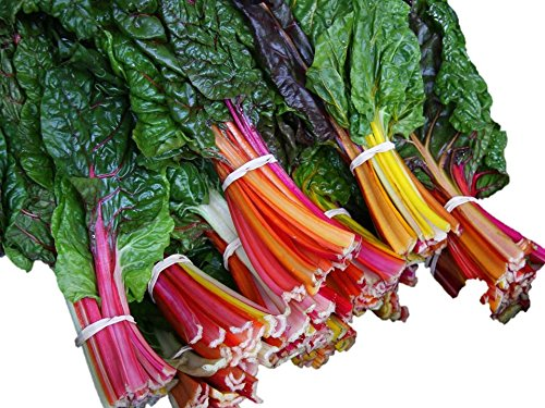 Chard Swiss Rainbow 35 Seeds Grow Unique Red Pink Yellow Green 166C Zellajake Farm and Garden Carries All The Seeds That You Need!