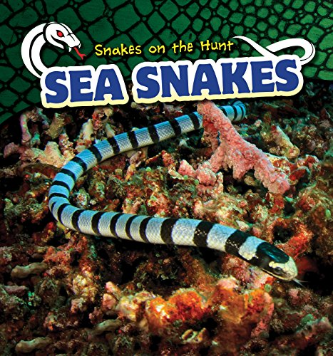 (Sea Snakes (Snakes on the Hunt))