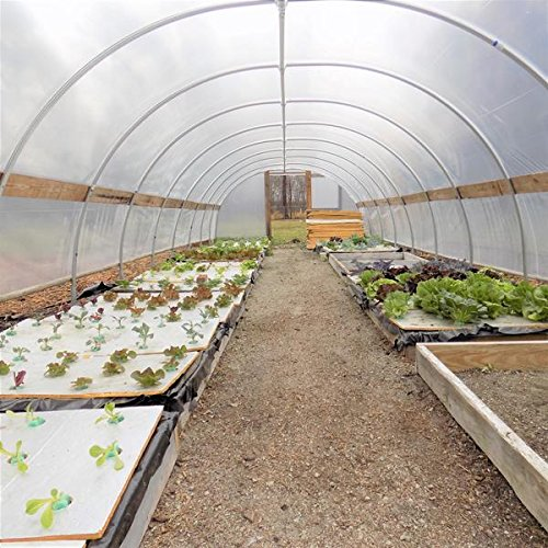 Bootstrap Farmer Greenhouse Plastic 4 Year 6 mil UV Resistant Clear Polyethylene Film 20 x 26 by by Bootstrap Farmer