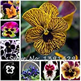 Hot Sale! 50pcs/pack Mexican pansy seeds Wavy Viola Tricolor Flower Seeds bonsai potted plant DIY home & garden