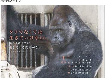 2020年 シャバーニ・格言(卓上)カレンダー