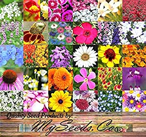 PERENNIAL Wildflower SEEDS - BULK MIX - Minimum 30 VARIETIES - 100% seed NO FILLERS - By MySeeds.Co (001 oz - (350+ sq. ft))