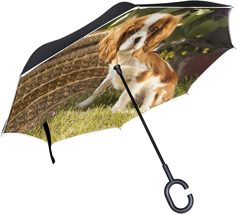 Parapluie invers/é Mignon Animal de Compagnie Cavalier King Charles Spaniel Parapluie invers/é Double Couche Parapluie avec poign/ée en Forme de C
