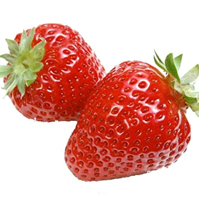 HOTUEEN 100pcs/ Bag Cream Strawberry Seeds Outdoor Plants Garden Decorating Fruits : Garden & Outdoor