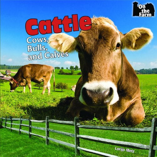 Cattle Cow Bull - Cattle: Cows, Bulls, and Calves (On the Farm)