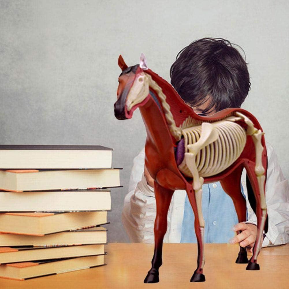 didatecar Animal Anatomy Toy 4D Vision Modelo De Anatomía del Caballo para Niños Niños Ingenious