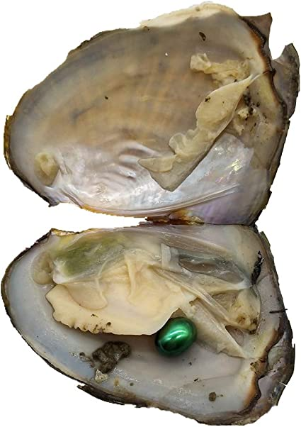 Akoya Oysters with Pearls