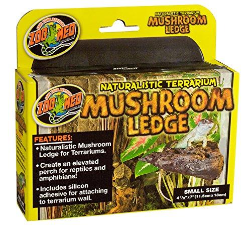 Naturalistic Terrarium - Naturalistic Terrarium Mushroom Ledge