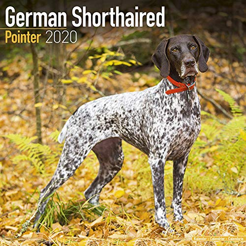 The 10 best pointer calendar 2019 for 2020