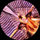 AmScope PS25 Prepared Microscope Slide Set for