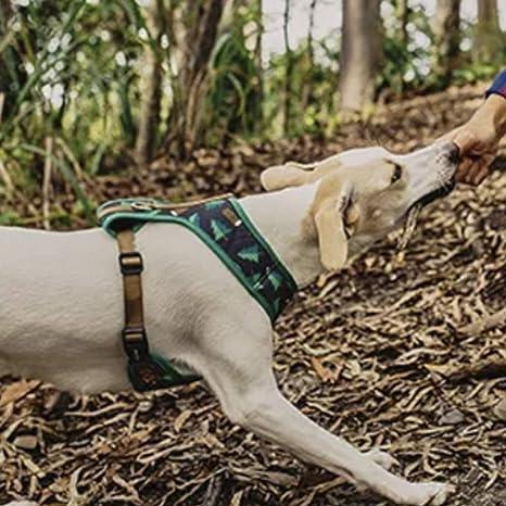 Woods Arnés de Pecho S: Amazon.es: Productos para mascotas