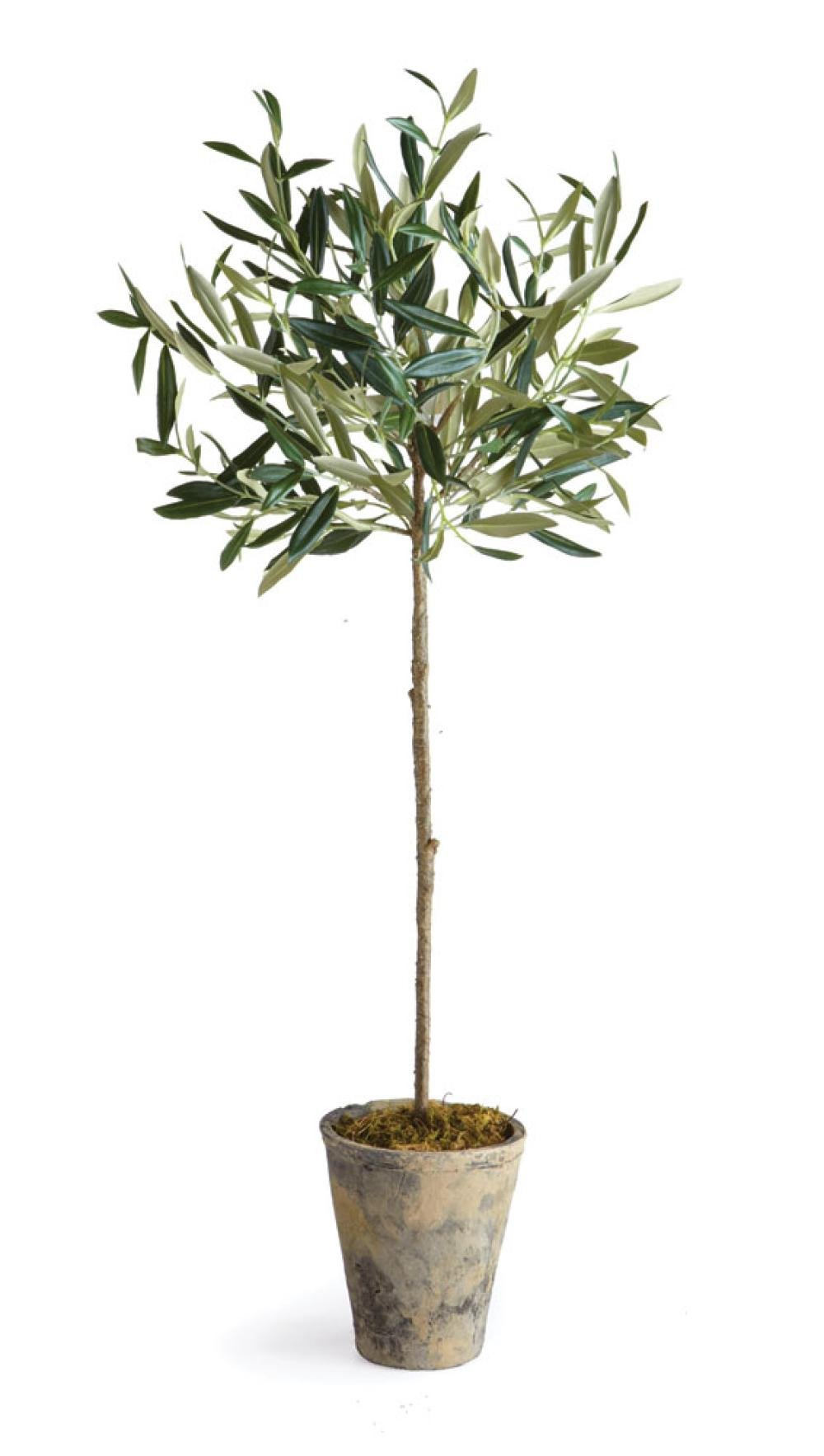 Olive Tree in Pot, 30-Inch