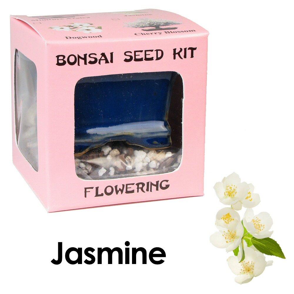 Eve's Jasmine Bonsai Seed Kit, Flowering, Complete Kit to Grow Jasmine Bonsai from Seed