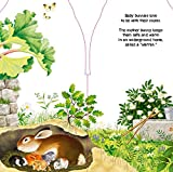 Little Bunny (Mini Look at Me Books)