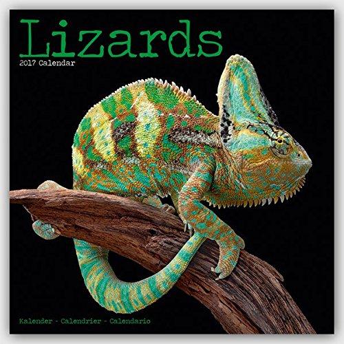 Lizards - Eidechsen 2017: Original Avonside-Kalender [Mehrsprachig] [Kalender] (Wall-Kalender)