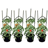 GTIDEA Set of 4 Tomato Cages Coated Galvanized Steel Heavy Study 4 Feet Garden Herb Plants Stakes with Trellis Connectors Arms