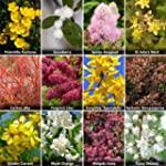 Complete Shrub Collection Bare Root B...