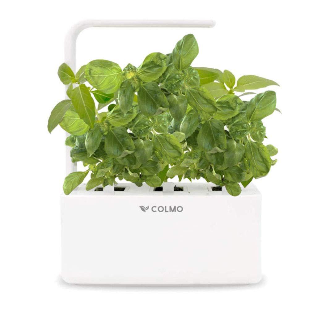 COLMO Indoor Herb Garden Kit Bild