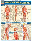 Muscular System (Quickstudy: Academic)
