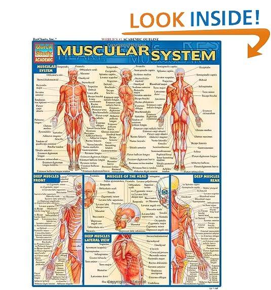 Muscle Diagram Amazon
