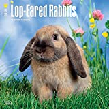 Lop Eared Rabbits 2018 12 x 12 Inch Monthly Square Wall Calendar, Domestic Small Pets Animals