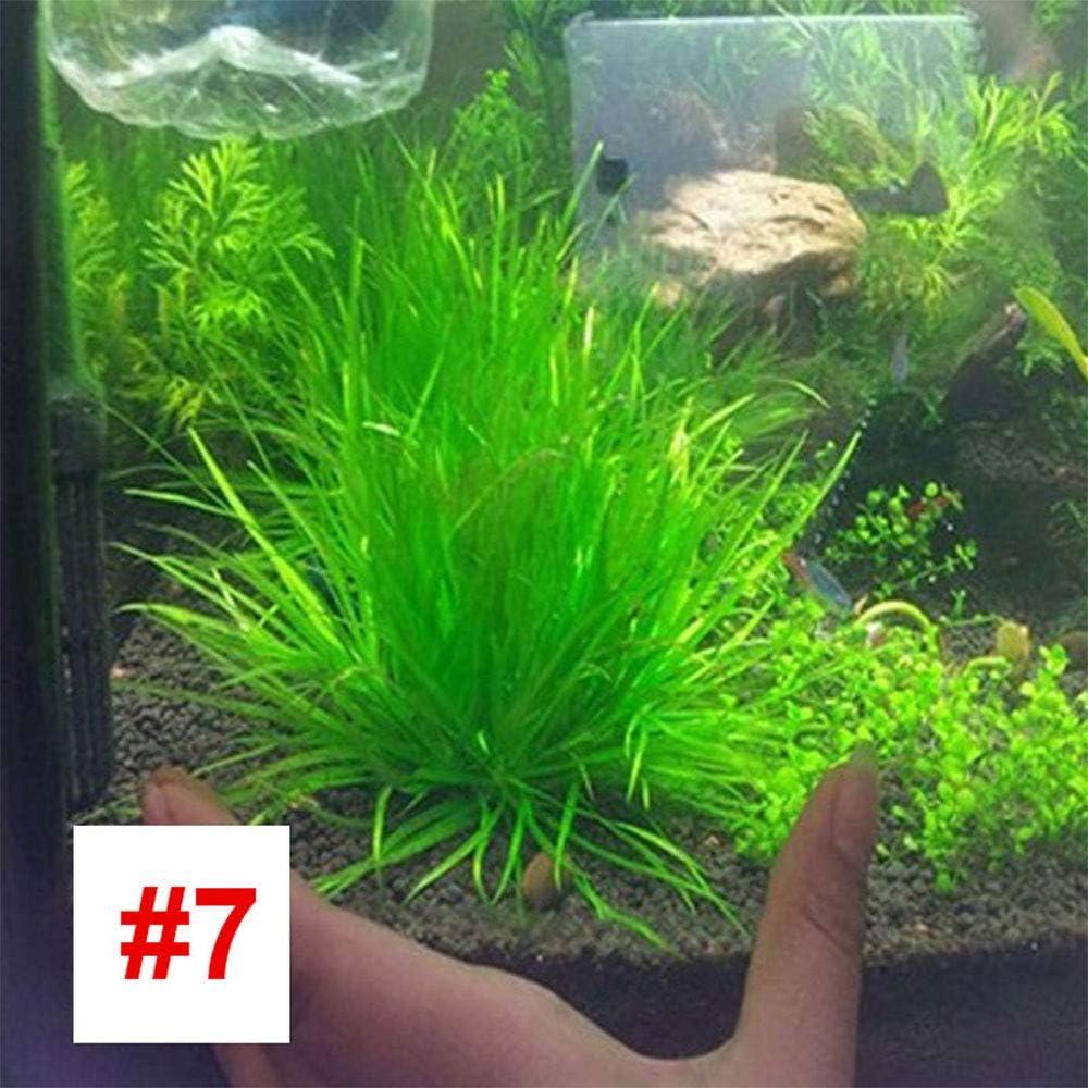 SKAISK Semillas de Acuario acuarios, 1000 pcs Bolsa de Agua, Semillas de césped Fácil de Cultivar para los huertos de jardín Decoración