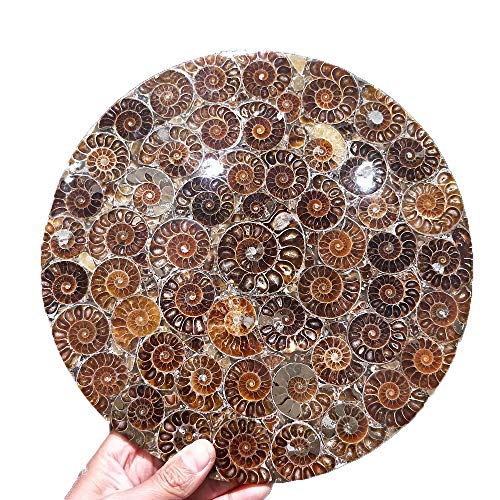 Natural Ammonite Fossil Slice Plate Crystal Jade Ocean Conch Stone Madagascar Mineral Specimen Display Wedding Party Decoration (Ammonite Fossil)