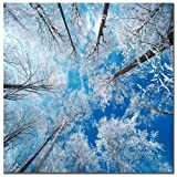 Trademark Fine Art Frozen Sky by Philippe Sainte-Laudy Canvas Wall Art, 35x35-Inch
