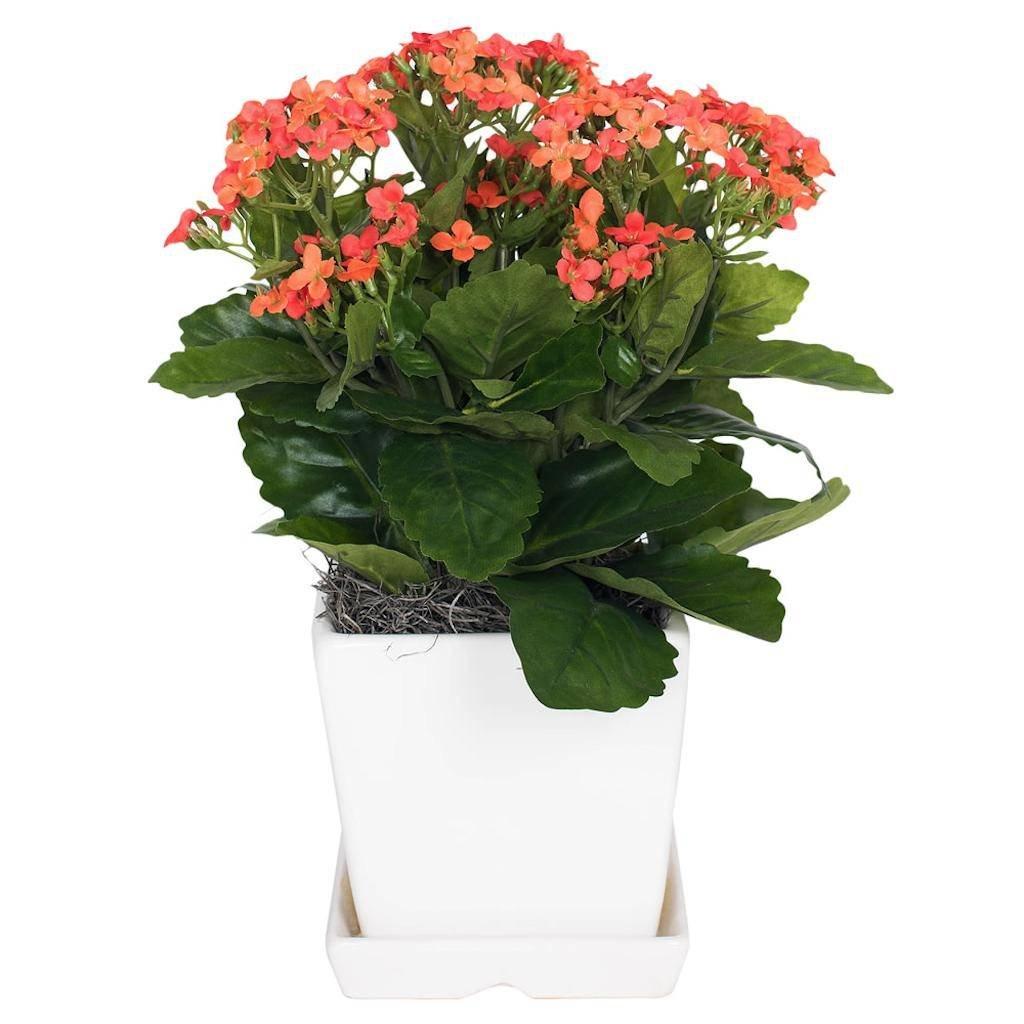 Vickerman F12234 Orange Kalanchoe Everyday Floral