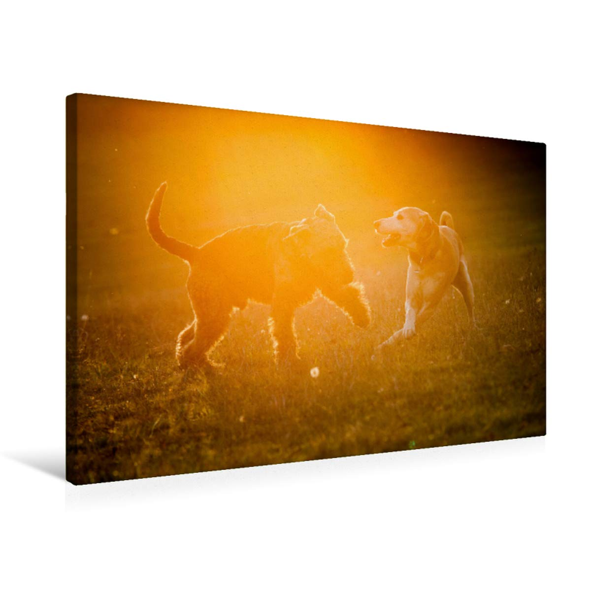 75x50 Premium Textile Canvas 75 x 50 cm Cross-Playing Dogs at Sunset
