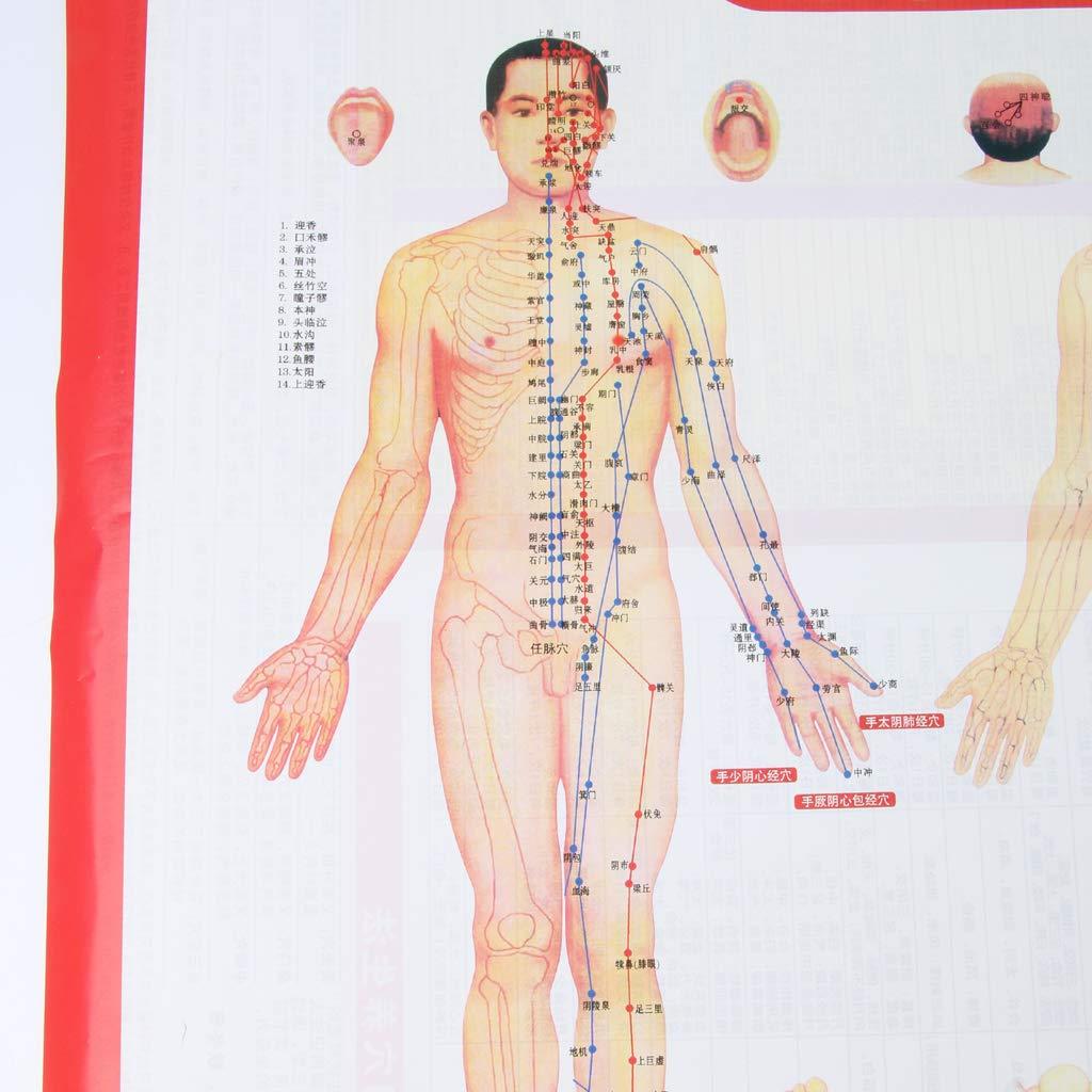 Baoblaze Grande Mappa Guida Agopuntura Punti Meridiani Moxibustione Poster Di Agopuntura Carta