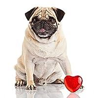 ZHOUBA Animal Pug Dog cuore rosso resina DIY Diamond Painting Full drill Cross Stitch Home Decor