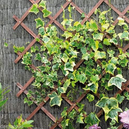 Oblea expandible de madera para jardín o escalada, panel de ...