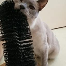 Amazon Com Aikopets Cat Arch Self Groomer Massager Groom Toy Dog Brushes Pet Puppy Cat Scratcher Toys Fur Grooming Cat Toy Brush Controls Shedding With Scratch Pad And Catnip Interactive Kitten Toys