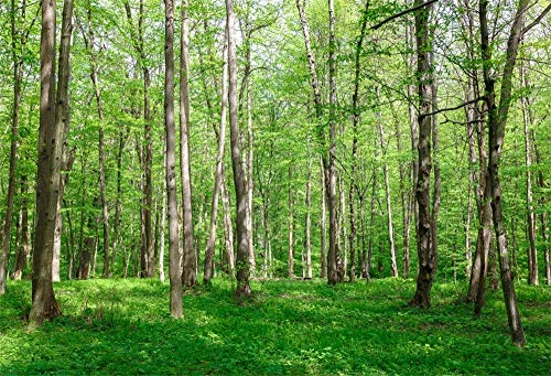 AOFOTO 8x6ft Vinyl Photography Background for Pictures Birch Forest Backdrop Budding Trees Green Grassland Family Spring Outing Vacation Children Kids Baby Portraits Shooting Vinyl Backcloth Screen