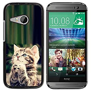 Paccase / SLIM PC / Aliminium Casa Carcasa Funda Case Cover para - Cute Praying Kitten God Christian Sweet - HTC ONE MINI 2 / M8 MINI
