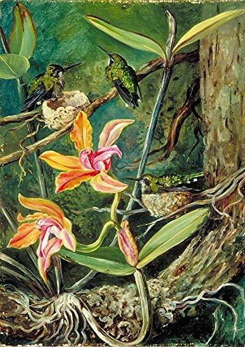 Marianne North Orchid and Humming Birds, Brazil 1873 Royal Botanic Gardens, Kew 30