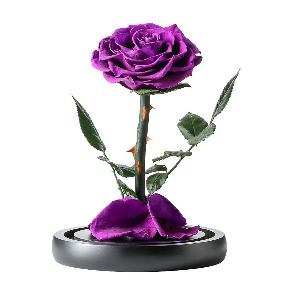 Puto Handmade Preserved Flower Rose with Real Fallen Petals in Luxury Glass Dome with Wooden Base and Elegant Gift Box Gift for Valentines Day Mothers Day Anniversary Wedding