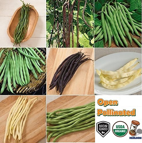 David's Garden Seeds Collection Set Bean Pole NEP321 (Multi) 8 Varieties 600 Seeds (Open Pollinated, Heirloom, (Garden Seed Collection)