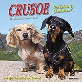 Crusoe the Celebrity Dachshund 2022 Mini Wall Calendar