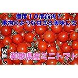 高糖度10度 和歌山産 ミニトマト 1kg 房なし フルーツトマト
