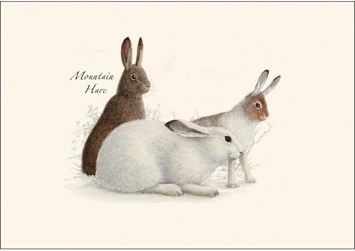 Earth Sky Water – Rabbit Hare Assortment Notecard Set – 8 Blank Cards with Envelopes 4 Each of 2 Styles