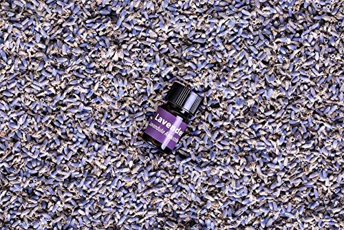 bMAKER Dried French Lavender Flower Ultra Blue Grade, 1 lb - Edible Food Grade- Best for Cooking, and Crafting