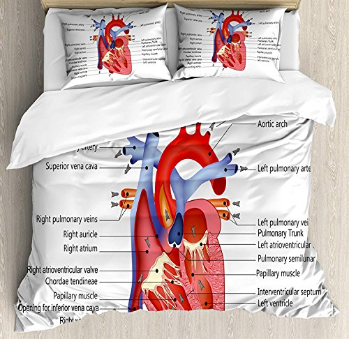Educational Bedding Sets, Medical Structure of the Hearts Human Body Anatomy Organ Veins Cardiology, 4 Piece Duvet Cover Set Quilt Bedspread for Childrens/Kids/Teens/Adults, Coral Red Blue,Twin Size by TweetyBed