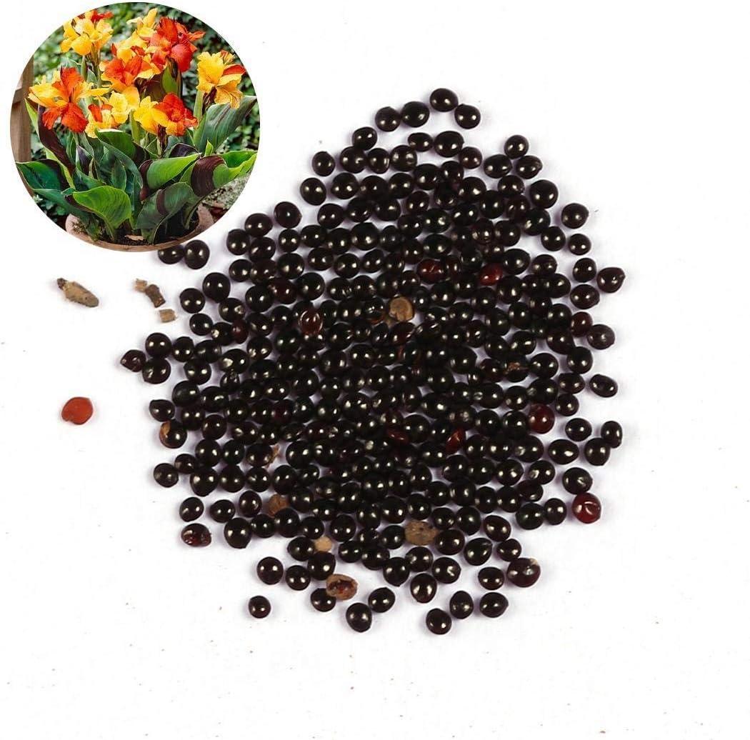 Free Venus 50 Unids/Pack Canna Seeds Greening Flower Seeds Garden Patio Semillas