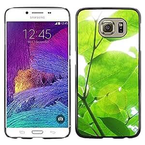LECELL--Funda protectora / Cubierta / Piel For Samsung Galaxy S6 SM-G920 -- Sun Tree Green Nature Spring --