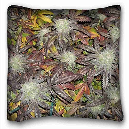 Custom Characteristic ( Nature Plants Blackberry Kush Strain marijuana weed ganja y ) Pillow Cushion Case Cover One Sides Printed 16x16 Inches suitable for Full-bed