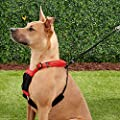 Sporn Stop-Pulling! Harness Large/XL Red & Black