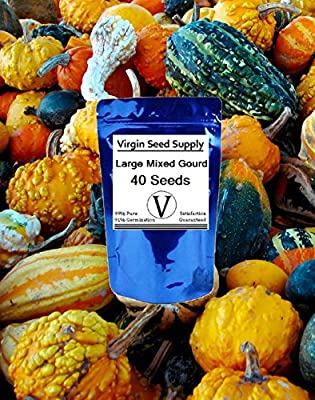 Virgin Seed Supply Large Mixed Gourd 40 Count Seed Pack Organic Non-GMO Heirloom Variety