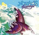 Novalis Flossenengel Avantgarde/Free